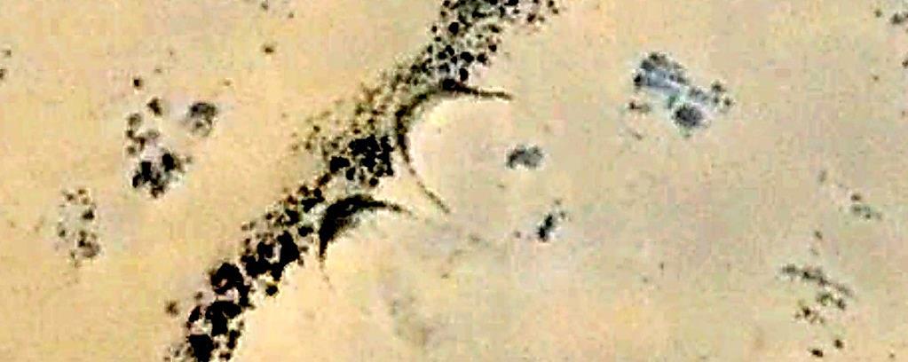 Геоглифы S 5932 и S 5933